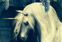 Like a fairytale / by Erin Kravchenko