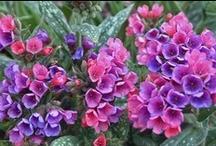 Hidden Garden in Mind / Dreamy garden, plant and flower pictures.