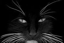 cat stuff / by Susan Mac