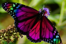 Butterflys and Dragonflys~~