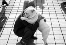 Bully Love / All things English bulldog / by Leah G