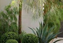 Works in progress: delmar garden / San Diego Plant Palette