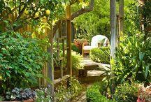 Gorgeous Gardens / by Debbie Fryer