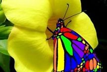 Over the Rainbow, Colorful Photography / Everything COLOR, Wizard of Oz, Photography with Color. Bright Color idea's