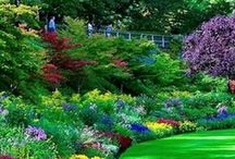 Barefoot in the Garden, Flowers, Design and everything related  / All about flowers, herbs, vegetables, garden design, garden gates, water gardens,