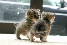 Pets & Cute Animal Pics / Cute animal photos, plus recipes for pet food, craft items & cool toys for animals