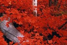 Fall / by Karen Hart