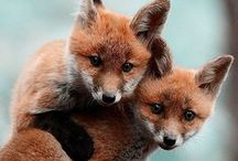 Fox Love / by Kristen Arnett's Green Beauty Team