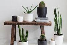 Packaging + interiors + plants