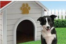 Boutique De Chien / The dog shoppe that features all things dog…from shelter to training aides and more. Have a new dog in your home? Visit http://www.doowaggle.com/doowaggle-dog-shoppe/  today! #dogstore / by The Game Supply