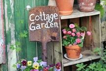 cottage gardens / by Jean Mcreynolds