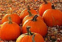 I Love Pumpkins! / by Heather Lynn
