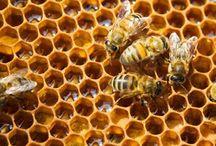 bees knees / bee keeping / by Sarah Kargol