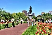 boston buzz / places to go, see, eat and drink in boston