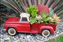 Succulents and other greenery / by Chillona