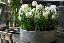Easter/Spring / by Nancy Cahn