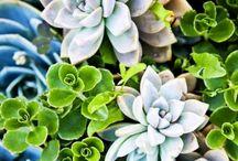 green it / Plants