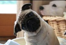 The one with pugs <3 / by Robin Twitty