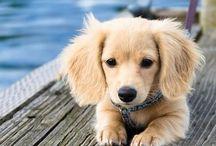 I love puppies