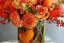 fall/halloween / by Wendy Whitehurst Hickman