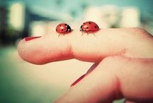 dragonflies and ladybugs...