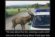 Funny / by Nancy Allen
