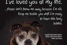 Pets To Love / by Nancy Allen
