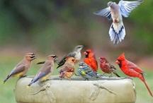 Birds, Bird Houses &Water Foul / by Nancy Allen