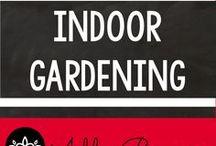 Indoor Gardening / Ideas for growing plants year round indoors