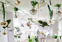 Snor Loves Plants / Green, Green and Green. On this board beautiful pictures of plants.