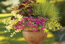 Container gardening ideas / by Ann Vincent