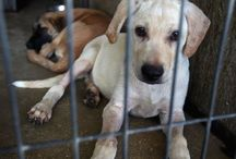 Dog Rescue/Shelter/Sanctuary Ideas / Plans, ideas and how to's on opening a Dog Rescue!