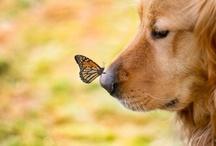 So lovely! / Animais,essas criaturas maravilhosas! / by Margarida Lopes