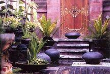 Sheddie garden