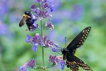 ﴾❊Birds, Bees, Flowers and Trees 2❊﴿ / Beautiful photographs of nature at its finest. / by Kymm Stafford