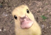 Fuzzy Fuzzy Cute Cute / SO FLUFFY I'M GONNA DIE / by Kathryn Jones