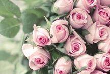 flowers / by Sonja Kock