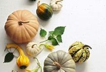 Fall Celebrations / Seasonal eats, home decorating ideas and activities for kids