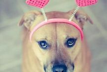 Be My K-9 Valentine / Valentine's Day treats and more for your dog.