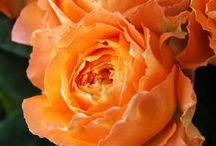 Flower gardening / by Timothy Dale Whalen Jr.