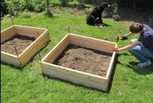 DIY Gardening 2 / by Kelly Lamb