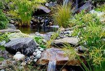 Pond Design, Care, Plants and Wildlife