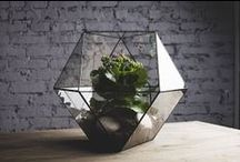 HOME: flower/plant decorations / by Maria Jensen