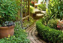 Gardening/outdoor / by Ashley Robledo