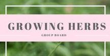 Growing Herbs {Group Board} / Everything about growing, eating, harvesting and preserving herbs.New contributors are welcome to send me a message (Nicki Zieth) with your Pinterest email and I will join you. PLEASE only join if you have a interest in growing, eating and preserving herbs, Please only post pins that are about food preserving. off topic pins and inappropriate pins will be deleted.