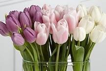 Love Beautiful Flowers
