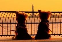 Puppy Love <3 / by Brittany Ferando