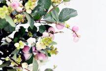 Flowers & Plants / Flowers plants botanicals bouquets bloom