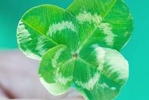 Holiday: St. Patricks Day