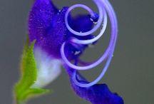 Flowers / Growing things / by Jackie Evers